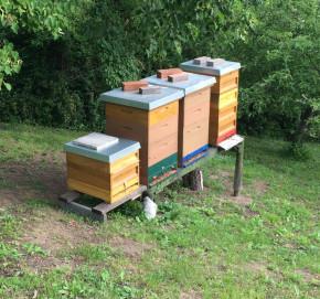 1kg Glas österr. Bienen-Honig aus eigener Erzeugung